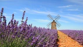 Франция - Valensole - Lavandes Стоковое Изображение RF