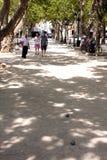 Французская ривьера des Lys места St Tropez стоковое изображение rf