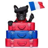 Французская собака стоковая фотография