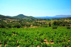 французские виноградники Стоковая Фотография RF