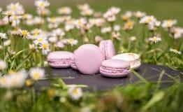 Французские macarons в саде Стоковая Фотография