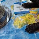Французский бульдог лежит на карте мира с паспортом, шляпой и небольшим самолетом, близкими вверх по лапкам, перемещению с собако стоковое изображение