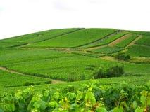французский виноградник Стоковое фото RF