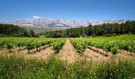 Французский виноградник горных вершин Стоковое фото RF