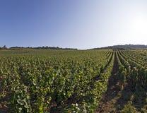 французский виноградник Стоковая Фотография RF