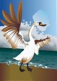 Фронт лебедя моря Стоковое Изображение RF