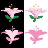 Фронт лист лилии Стоковые Фото