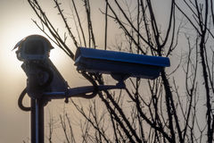 Фронт камеры слежения CCTV ветвей дерева Стоковые Изображения