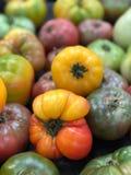 Фронт томатов Heirloom красный желтый Стоковое фото RF
