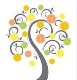 фруктовое дерев дерево энергии цитруса Стоковая Фотография RF
