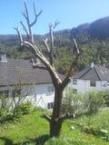 Фруктовое дерев дерево Стоковая Фотография