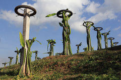 Фруктовые дерев дерев дракона Стоковое Фото