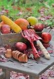 Фрукты и овощи с инструментами Стоковое фото RF