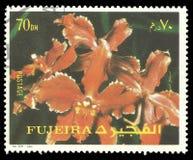 Фуджейра Объединенные эмираты, цветки стоковая фотография rf
