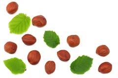 Фундуки при листья изолированные на белой предпосылке Взгляд сверху Стоковое Изображение RF