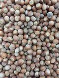 Фундуки сушат изображение гаек плода стоковое фото