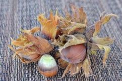 фундук Орегон лещины стоковая фотография rf