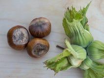 Фундуки вне и внутри их защитных листьев Стоковые Изображения RF