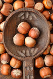 Фундуки на деревянной ложке Стоковая Фотография