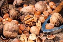 Фундук и грецкий орех Стоковое Изображение