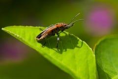Фуражировать насекомого Стоковое Изображение RF