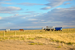 фура овец лошадей hearder Стоковое Фото