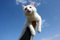 фургон кота Стоковое фото RF
