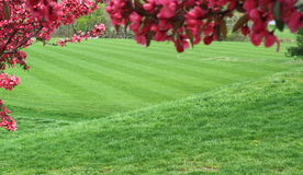 футбол поля зеленый стоковое изображение