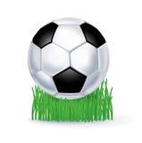 Футбол на траве изолированной на белизне Иллюстрация штока