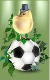 Футбол с зелеными предпосылкой и цыпленком иллюстрация штока