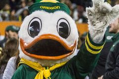 Футбол NCAA - Орегон на положении Орегона Стоковые Фото