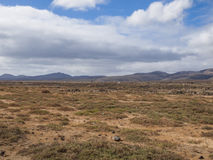 Фуэртевентура, Canaries, Испания Стоковое Изображение