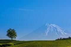Фудзи san на ферме чая Стоковое Изображение RF