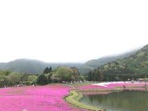 Фудзи Shibazakura Fastival Стоковые Фотографии RF