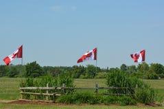Флаги Канады в поле Стоковое Изображение RF