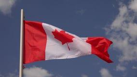 флаг Канады 4K сток-видео