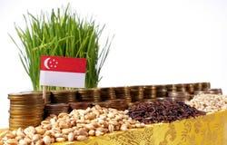 Флаг Сингапура развевая с стогом монеток денег и кучами пшеницы Стоковые Изображения RF
