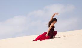 Фламенко в дюнах Стоковые Фото