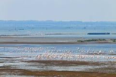фламингоы flock пинк Лагуна Рекы По Стоковое Изображение