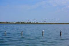 фламингоы flock пинк Стоковое Фото