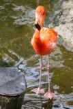 Фламинго близко к мосту стоковые фото