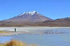 Фламинго и фотограф на красивом озере соли в Боливии стоковое изображение rf