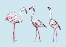 Фламинго чертежа Стоковые Фотографии RF