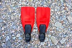 Флипперы на пляже Стоковое Фото