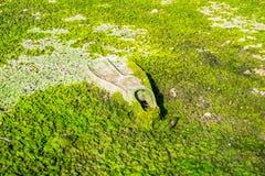 Флиппер подныривания покрытый при водоросли загрязняя пляж стоковое изображение rf
