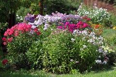 Флокс пестротканого flowerbed цветя в саде Стоковые Изображения