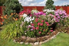 Флокс пестротканого flowerbed цветя на солнечный день Стоковое Фото