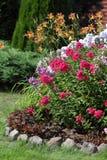 Флокс Flowerbed цветя в саде Стоковое Изображение