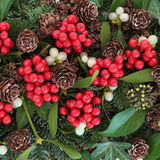 Флора зимы Стоковое Фото
