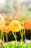 флора Стоковое Фото